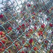 Плетеная сетка Сетка плетеная, покрытая ПВХ